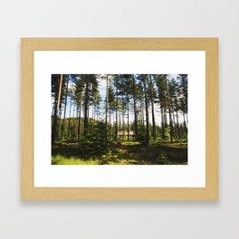 Norwegian Forest Framed Art Print
