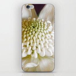 White Waratah Flower iPhone Skin
