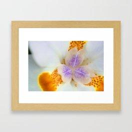 Fortnight Lily Framed Art Print