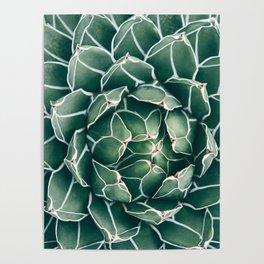 Succulent bloom II Poster