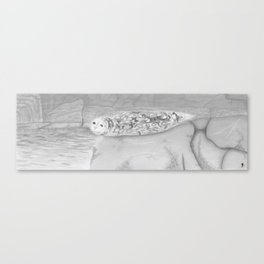 Barney, Harbor Seal Canvas Print