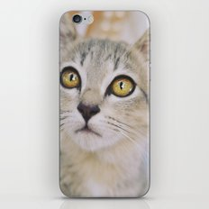Cat of the floating village iPhone & iPod Skin