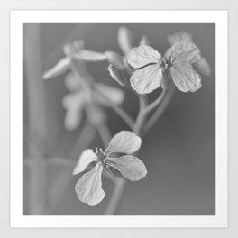 gray II Art Print