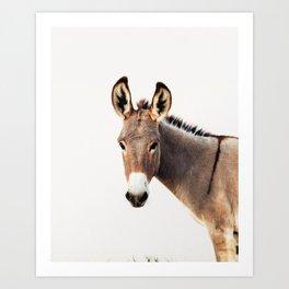 Gentle Wild Donkey portrait Art Print