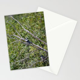 Two 4 One - Belted Kingfisher Stationery Cards