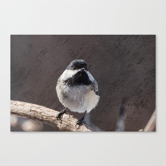Chickadee with Texture Canvas Print