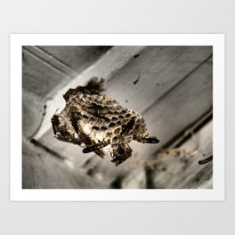 wasp nest Blacks and Yellows Art Print