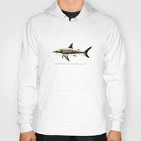 biology Hoodies featuring Carcharodon carcharias II ~ Great White Shark by Amber Marine