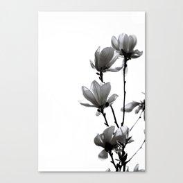 BLACK MAGNOLIA Canvas Print