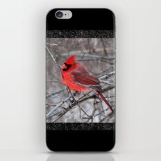 The Snow Cardinal iPhone & iPod Skin