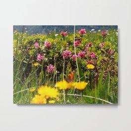 Alpine Flowers III Metal Print