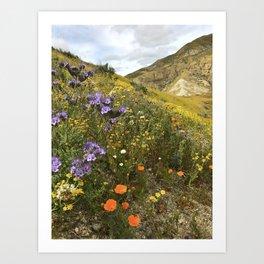 Wildflowers in California Art Print