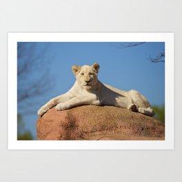 White Lioness Cub Art Print