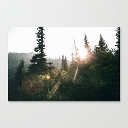 Sunny Forest II Canvas Print