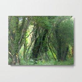 Ivy Hollow Metal Print