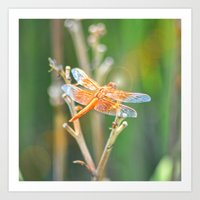 dragonfly Art Prints featuring Dragonfly by Lisa Argyropoulos