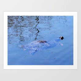 PAINTED TURTLE CAME OUT FOR SPRING BREAK Art Print