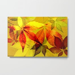 Virginia Creeper autumn colors Metal Print