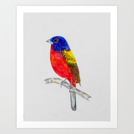 Painted Bunting Sentinel Art Print