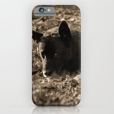 An old friend iPhone 6s Slim Case