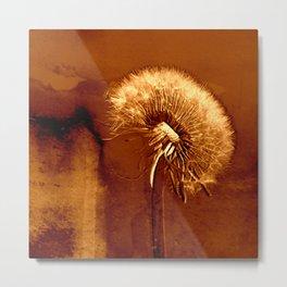 glowing dandelion on bright marsala Metal Print
