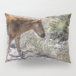 Salt River Wild Foal Pillow Sham
