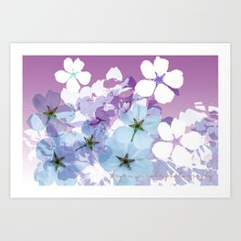 Almond Blossoms Violet 2 Art Print