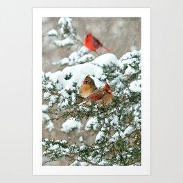 After the Snow Storm: Three Cardinals Art Print