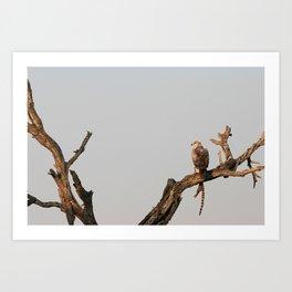Hawk Eagle with its Catch Art Print