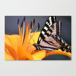Swallowtail Butterfly On A Lily Flower Canvas Print