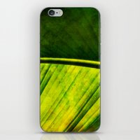banana leaf iPhone & iPod Skins featuring Banana leaf by helsch photography