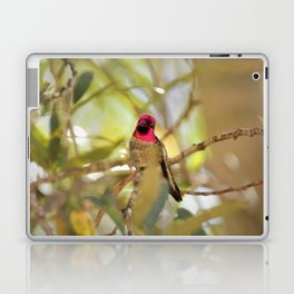 Hummingbird Beauty Laptop & iPad Skin