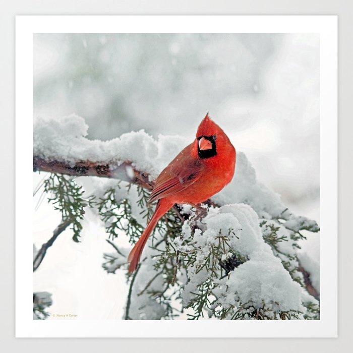 Cardinal on Snowy Branch #3 Art Print
