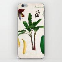 musa iPhone & iPod Skins featuring Musa Paradisiaca by plantage