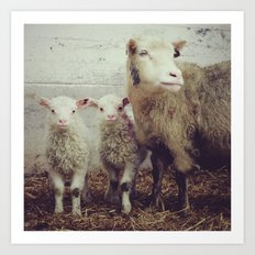 Sheep #1 Art Print