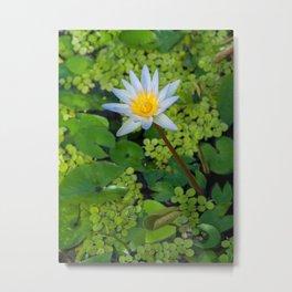 Beautiful Nymphaea Nouchali Lily Pad Flower is Blooming Metal Print