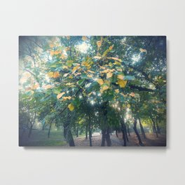 End of summer sunny afternnon Metal Print