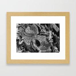 Tree Stumps Framed Art Print