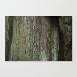 California Red Wood Canvas Print