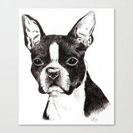 Boston Terrier Portrait Canvas Print