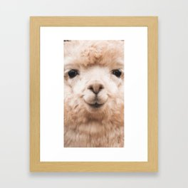 Face alpaca Framed Art Print