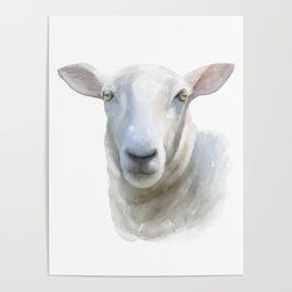 Watercolor Sheep Poster