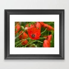 Wild Red Poppies Framed Art Print