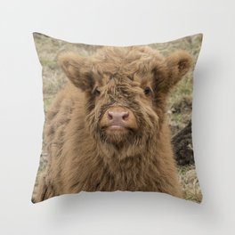 Scottish Highland baby cow Throw Pillow