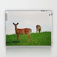 Backyard Deer Laptop & iPad Skin