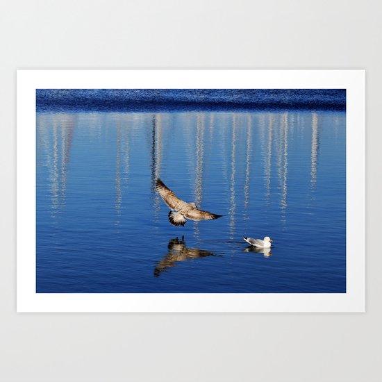 Gulls mirror Art Print