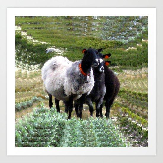 mountain sheep Art Print