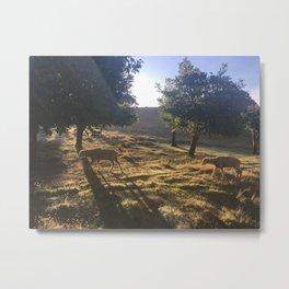 Ewes at Dawn Metal Print