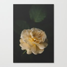 Roses (double exposure) Canvas Print