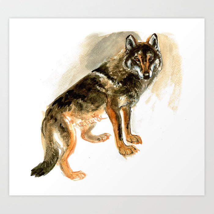 Iberian wolf watercolor Art Print